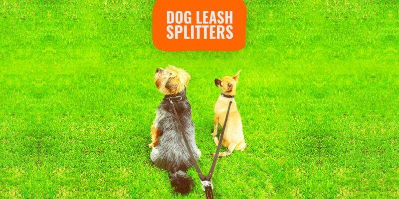 best dog leash splitters