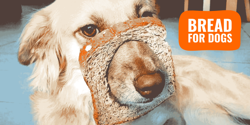 Bread for Dogs – Safety, Risks, Benefits & FAQ