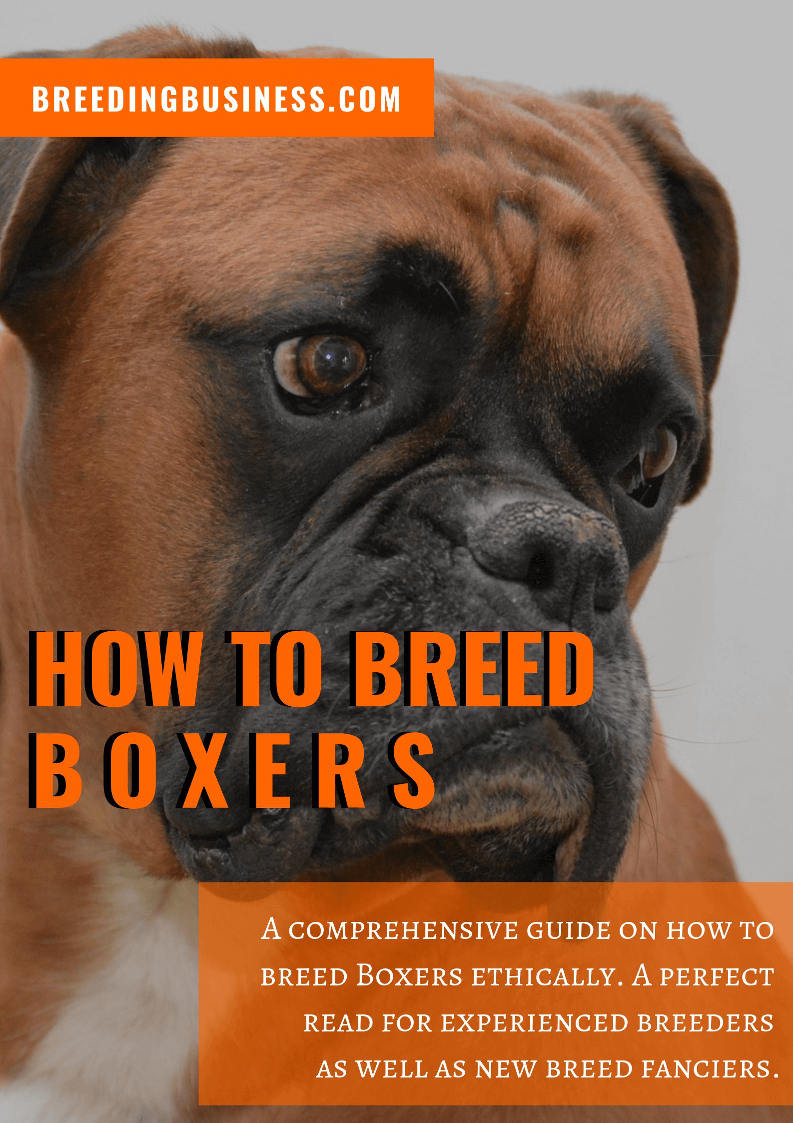 breeding Boxers