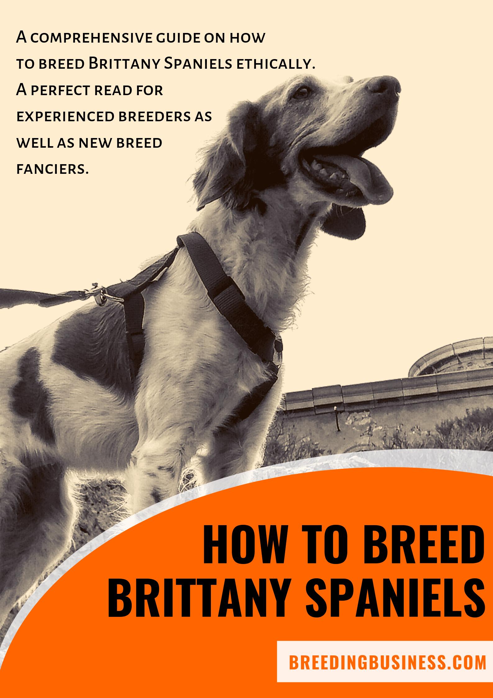 breeding Brittany Spaniels