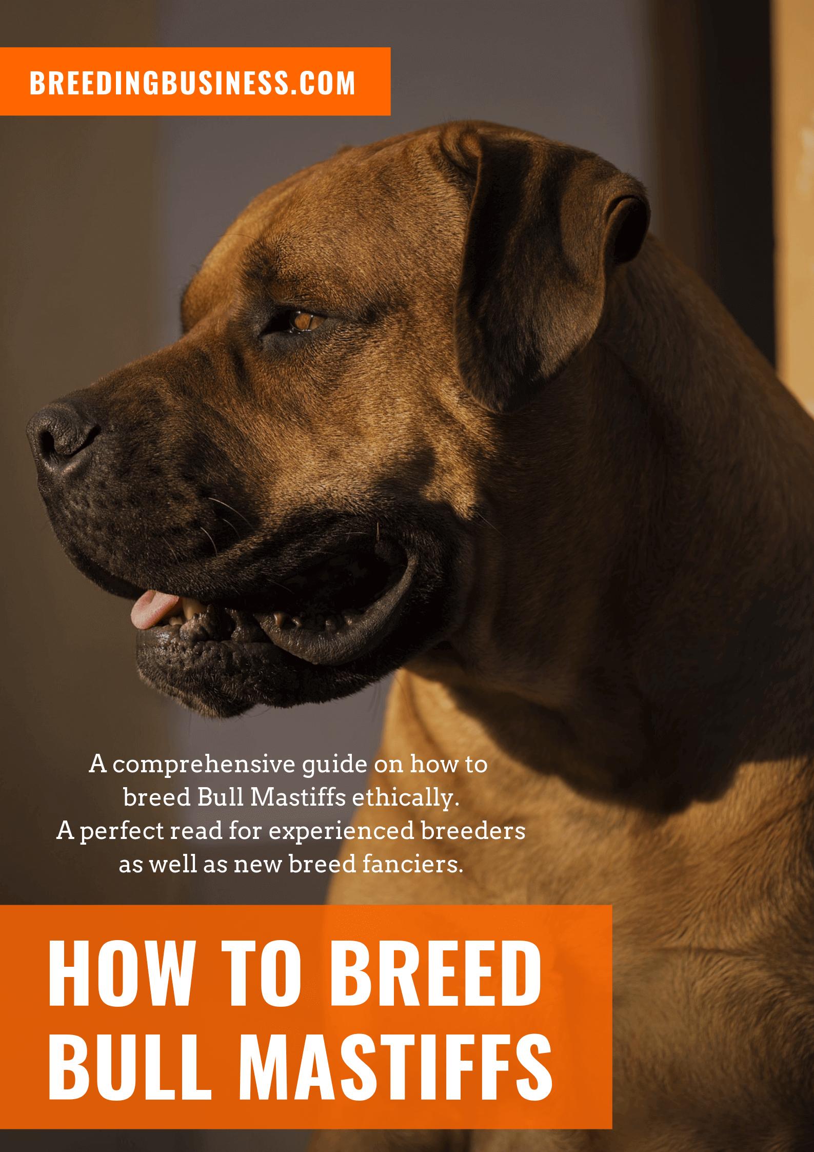 breeding Bull Mastiffs