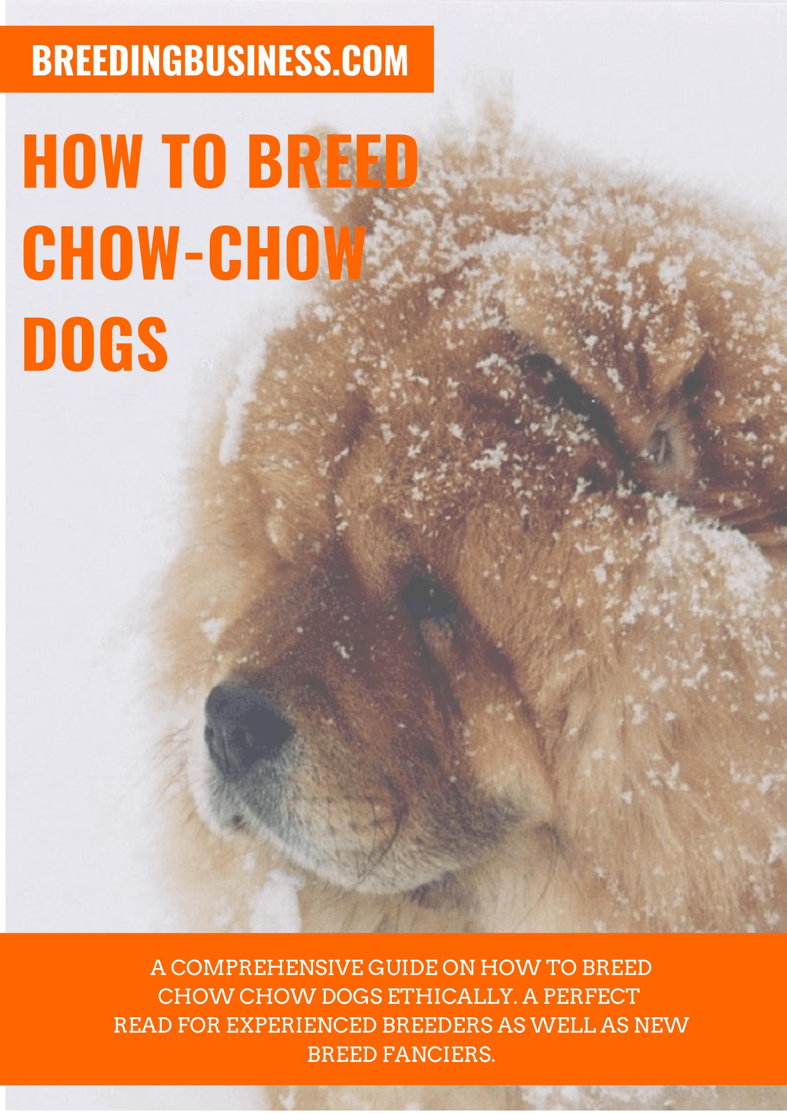 breeding Chow Chows