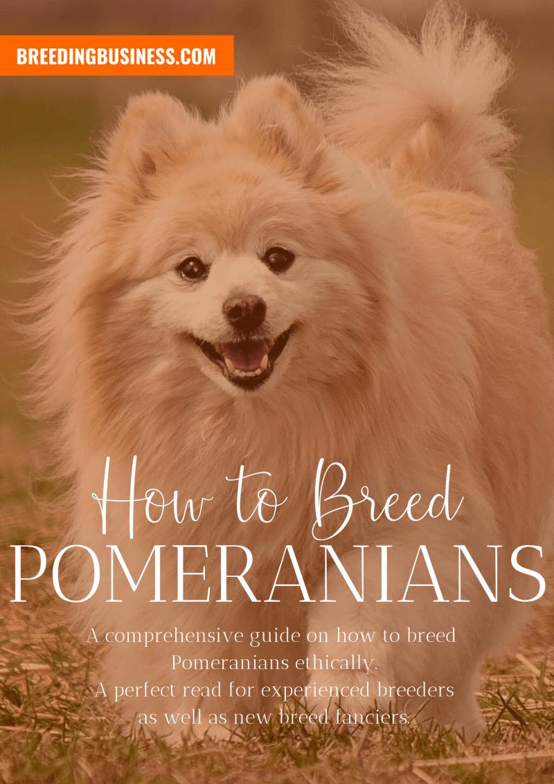 breeding Pomeranians