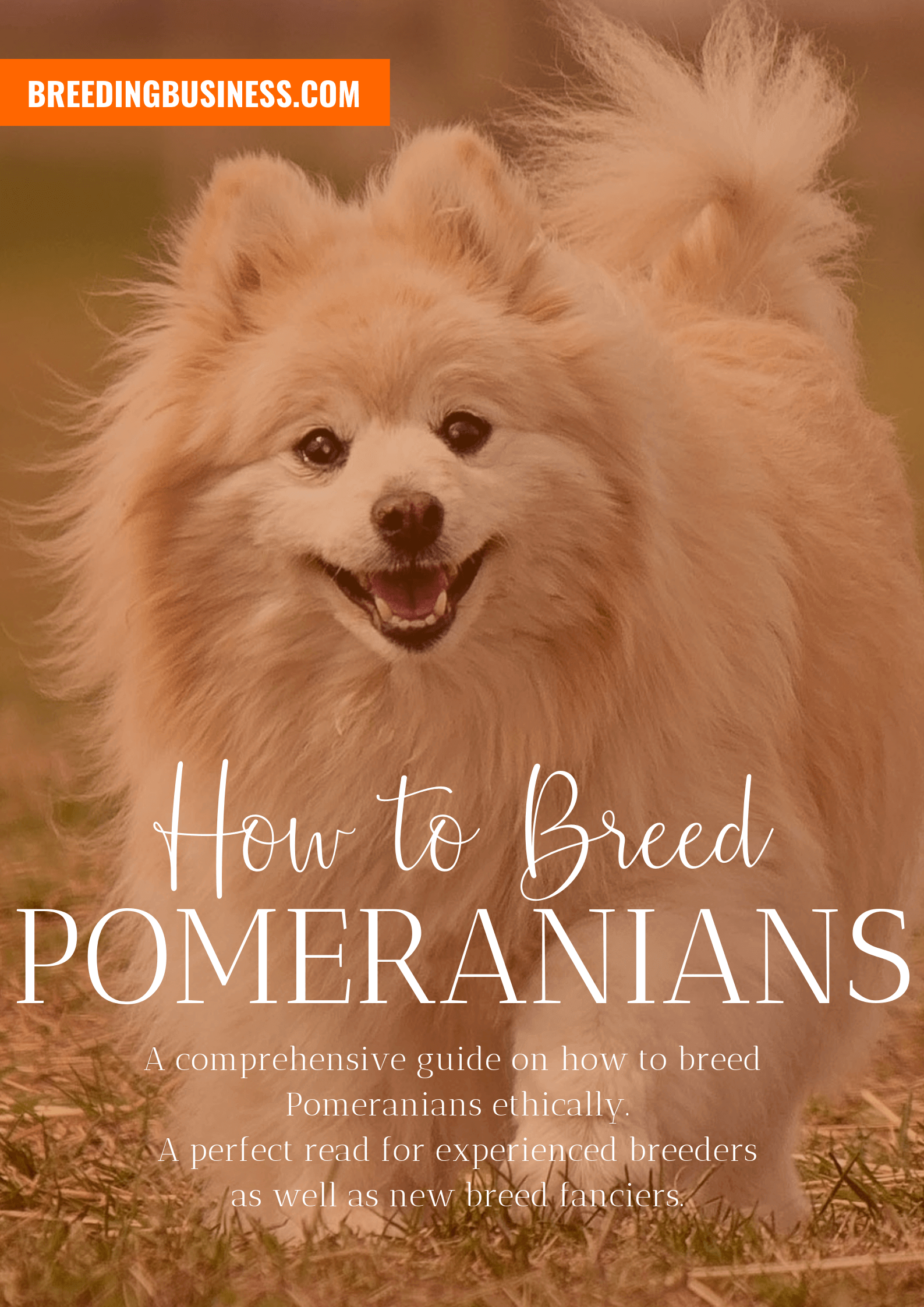 breeding Pomeranians