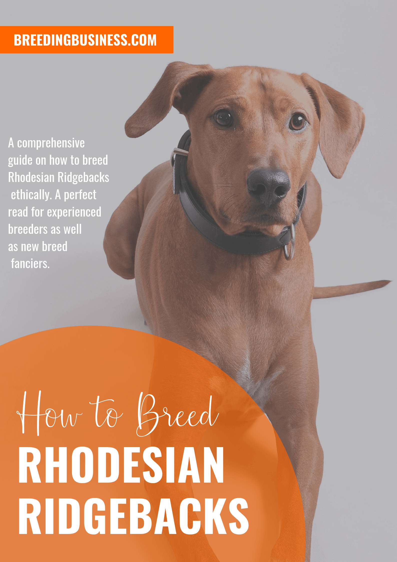 breeding Rhodesian Ridgebacks