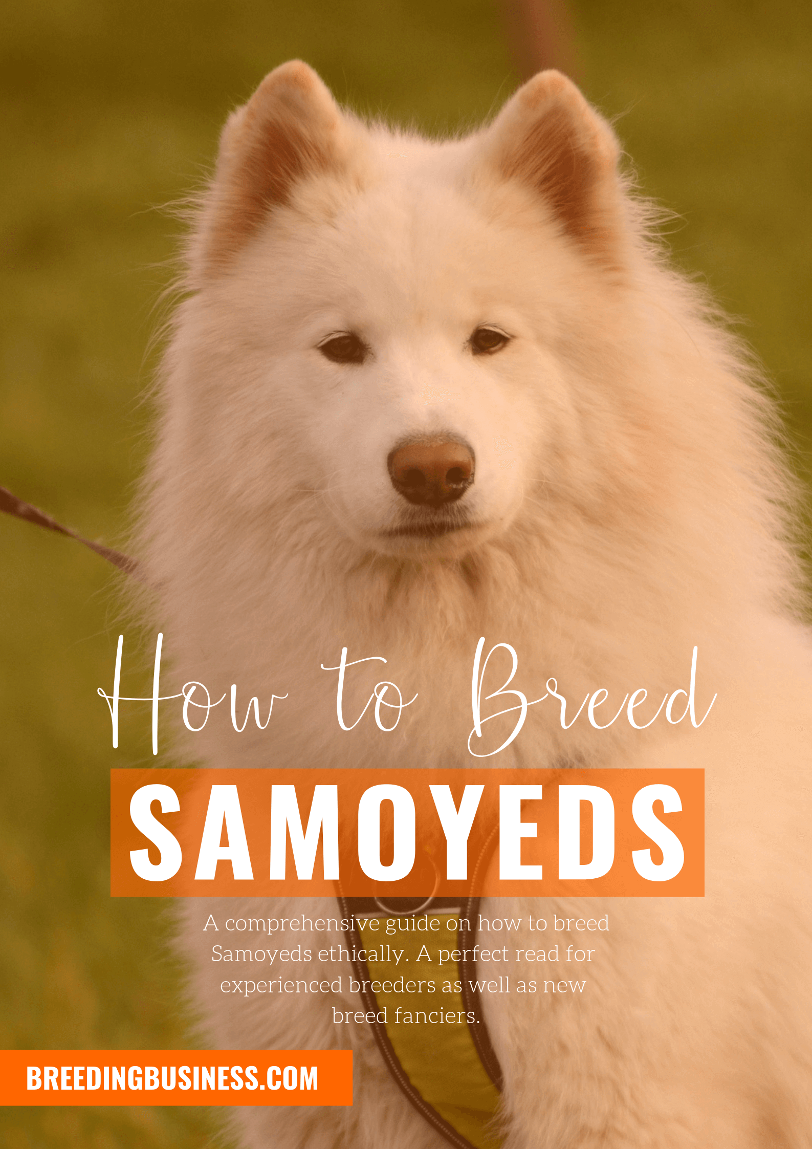 breeding Samoyeds