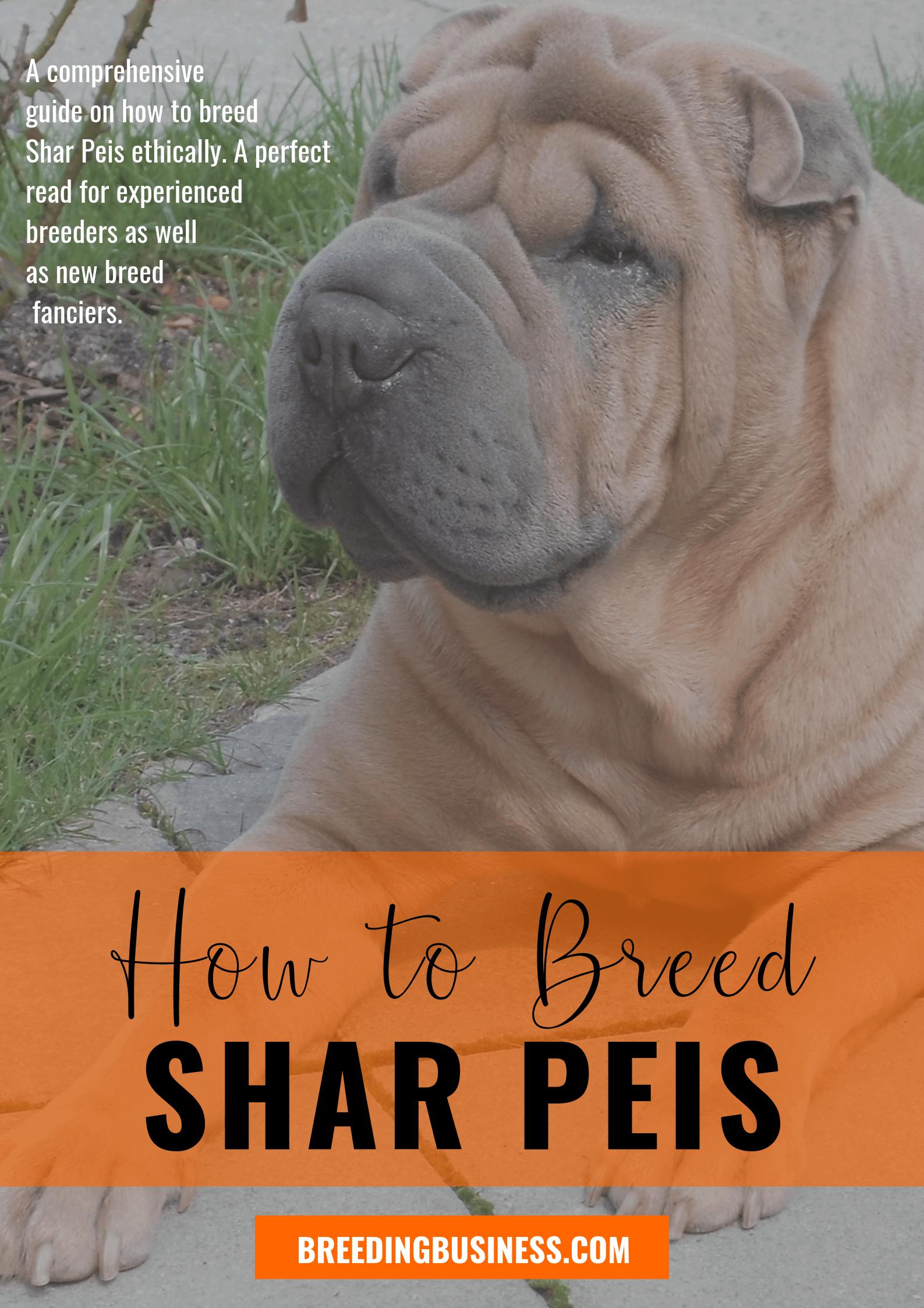 breeding Shar Peis