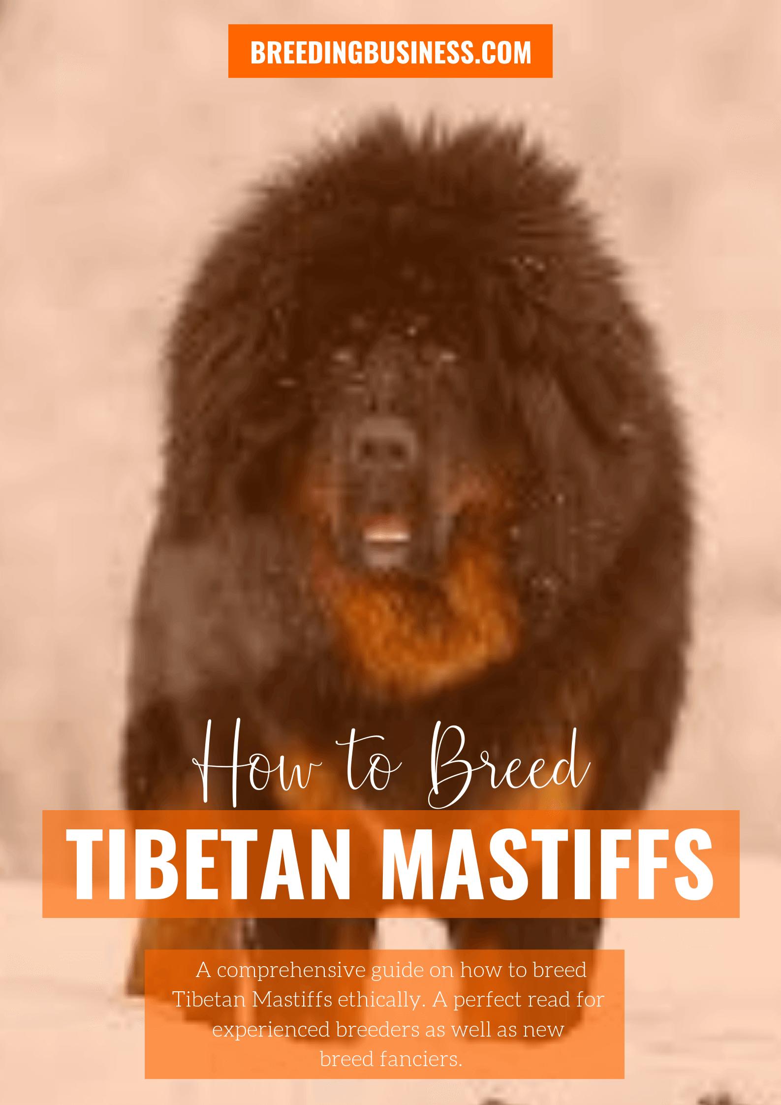 breeding Tibetan Mastiffs