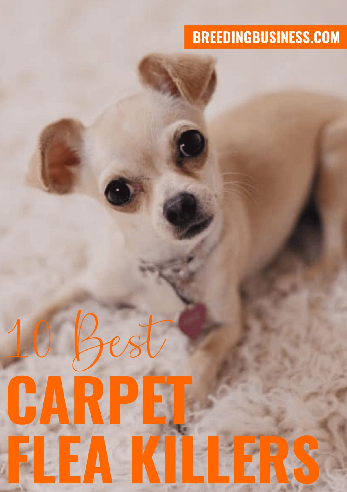 Reviews: Carpet Flea Killers
