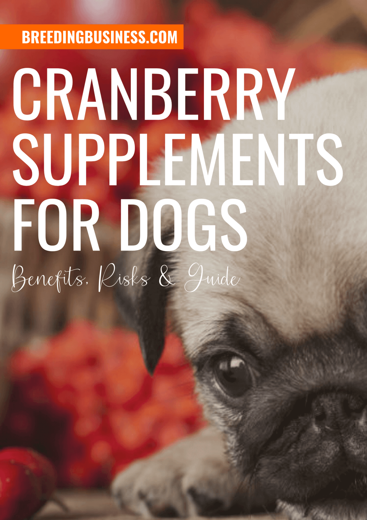 Guide: Cranberry Supplements for Dogs