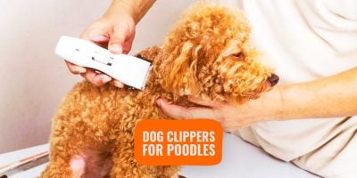 dog clippers for poodles