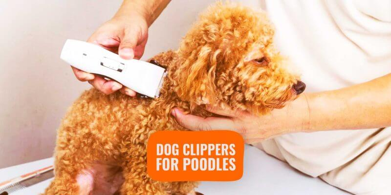 Dog Clippers for Poodles & Toy Poodles – Reviews & Buying Guide