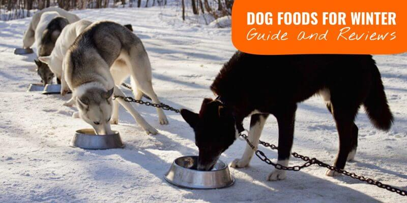 winter dog foods