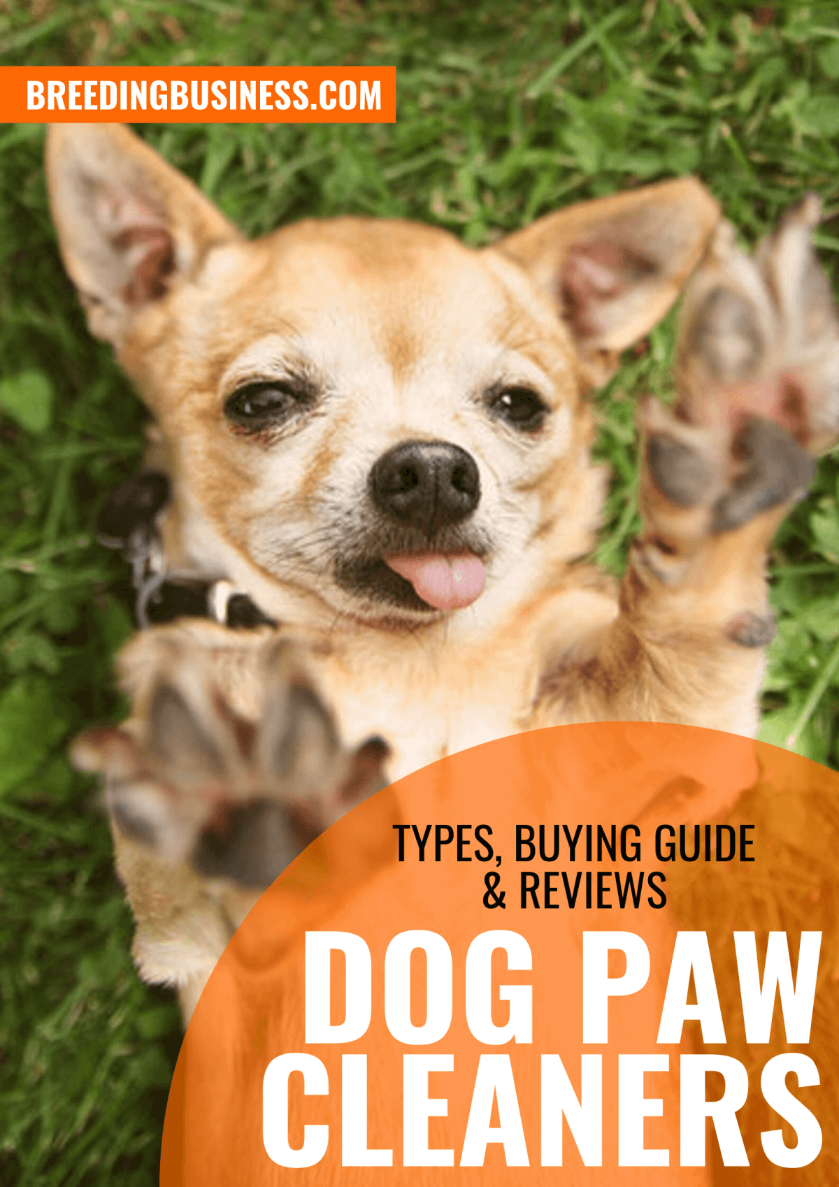 Dog Paw Cleaners – Types, Buying Guide & Reviews