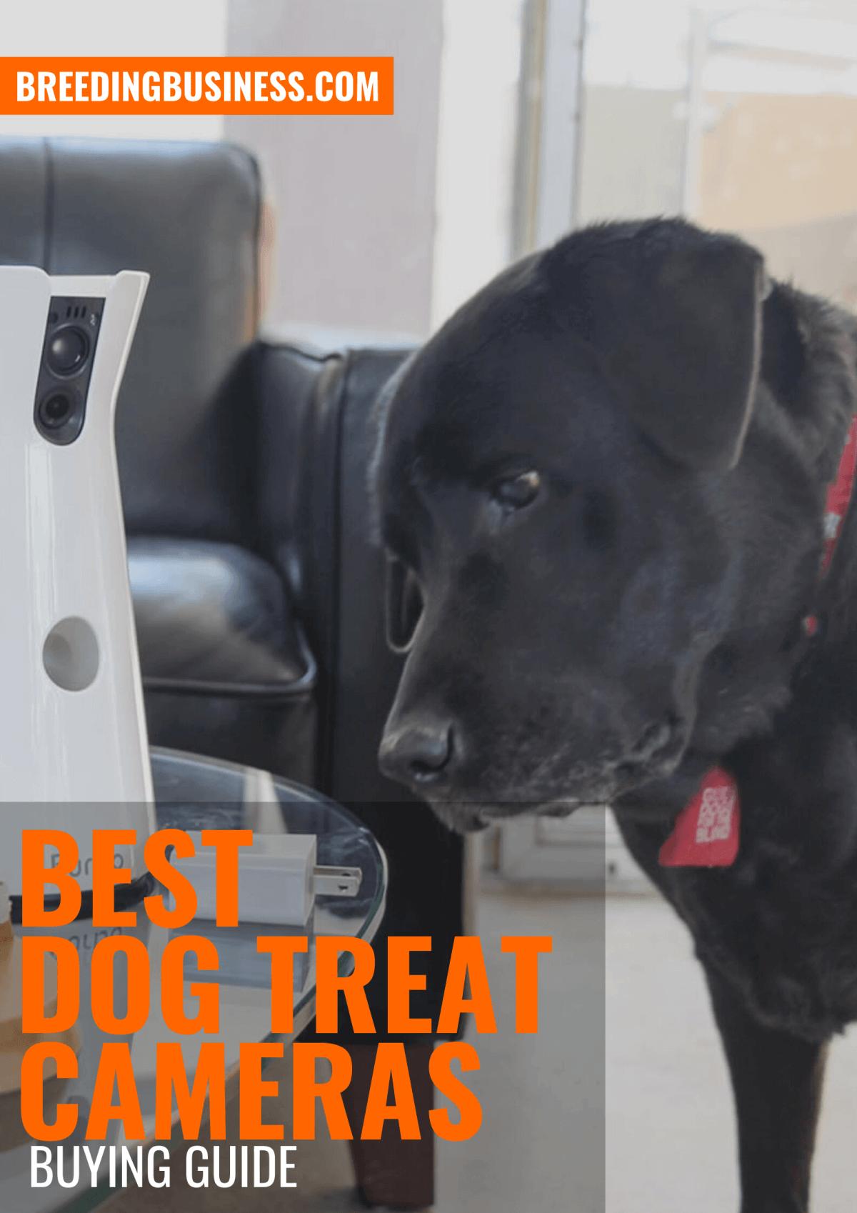 Reviews: the Top Dog Treat Cameras