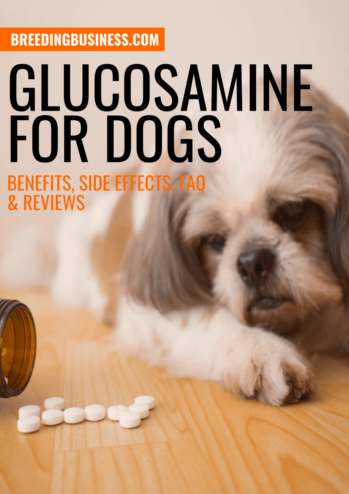 Guide: Glucosamine for Dogs