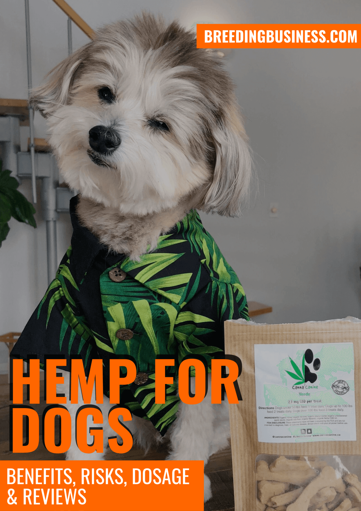 Best Hemp For Dogs – The Guide!