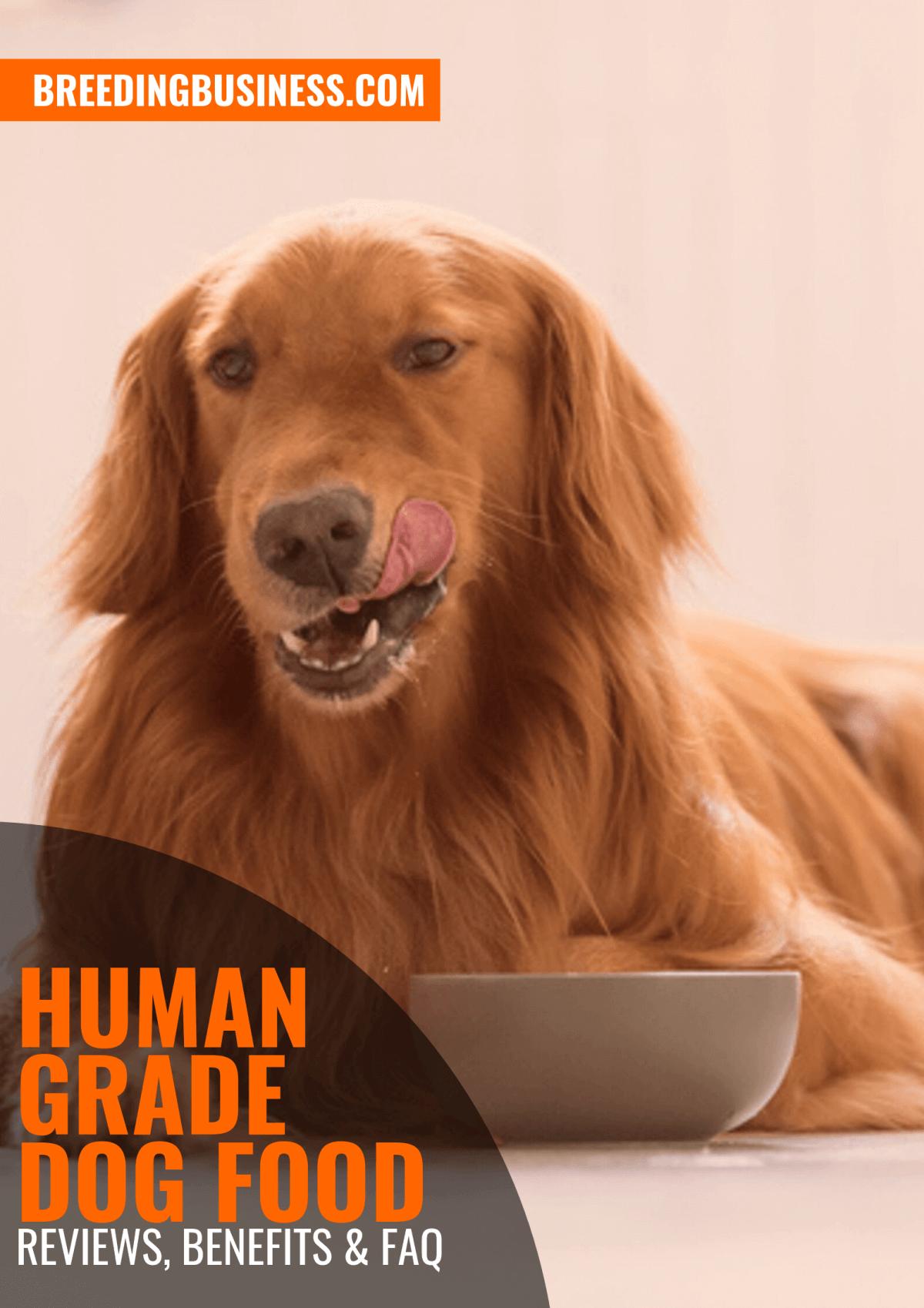 Human Grade Dog Foods – Reviews, Benefits & FAQ