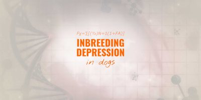 inbreeding depression in dogs