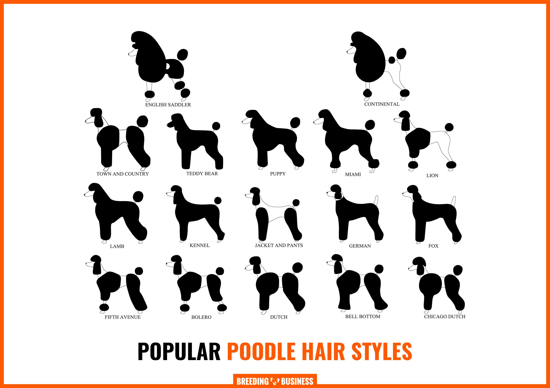 popular poodle hair cut styles
