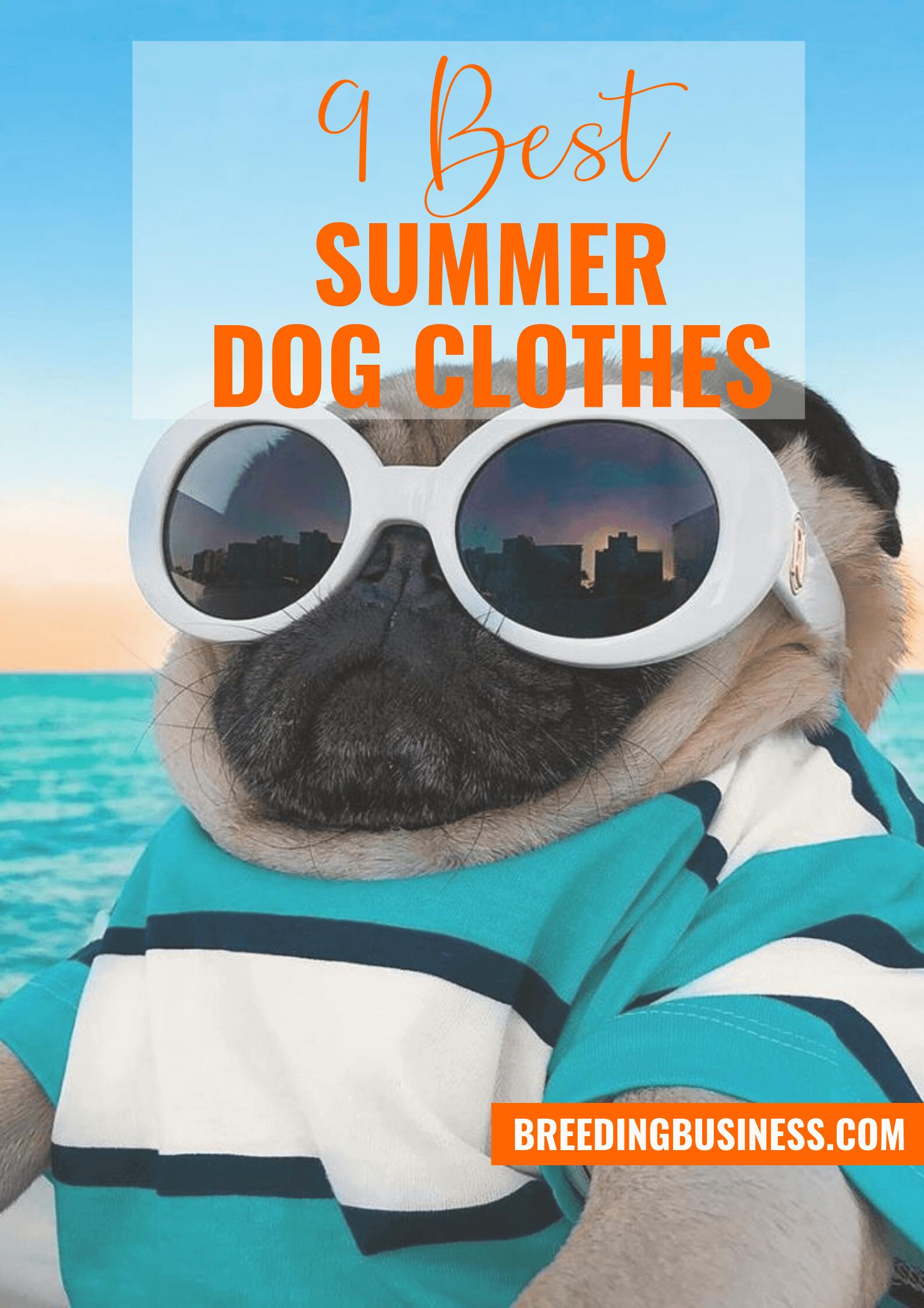 summer dog clothes