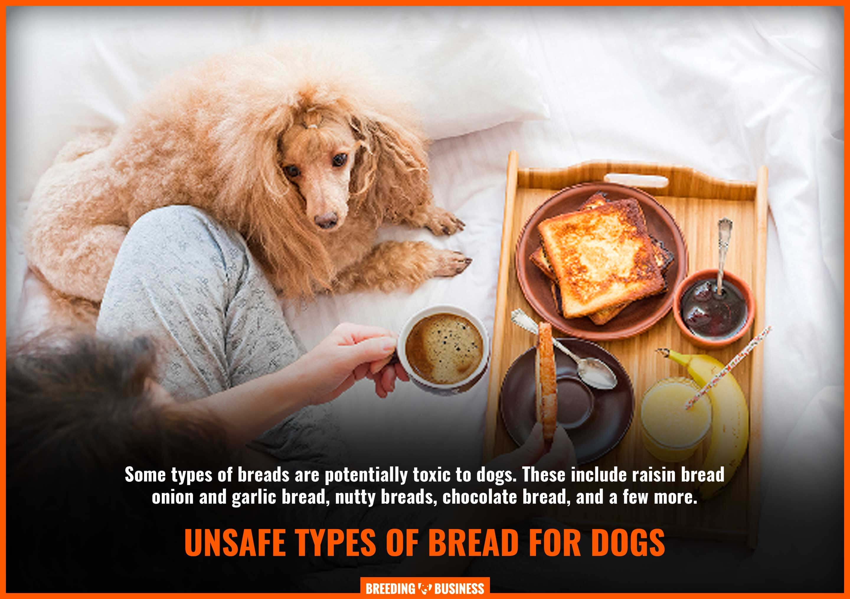 toxic bread for dogs