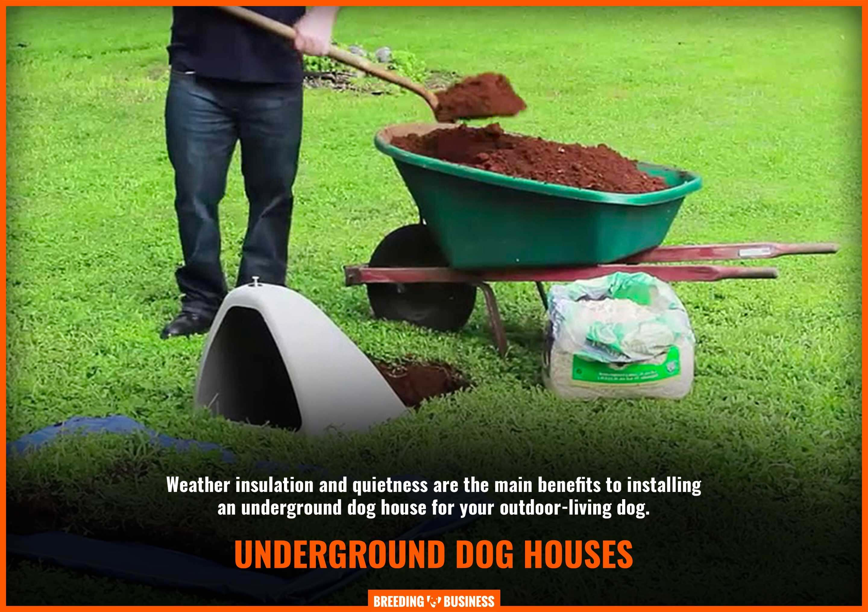 setup an underground dog house