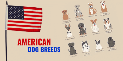 american dog breeds