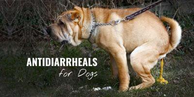 Antidiarrheals for Dogs – Best OTC & Prescription Drugs to Stop Diarrhea in Dogs
