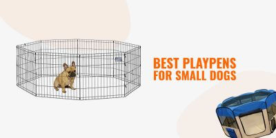 best playpens for small dogs