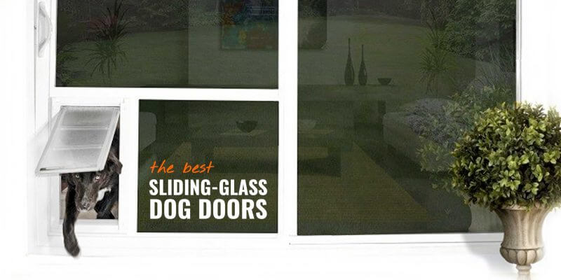 Sliding Glass Dog Doors – Reviews, Buying Guide, Installation & FAQ