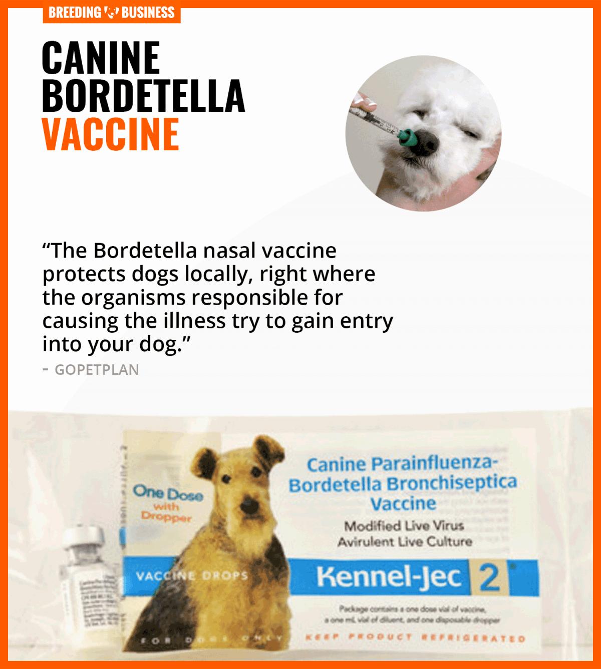 canine bordetella vaccine