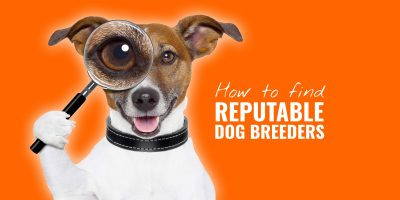 How To Find Reputable Dog Breeders – Online, Offline & Due Diligence