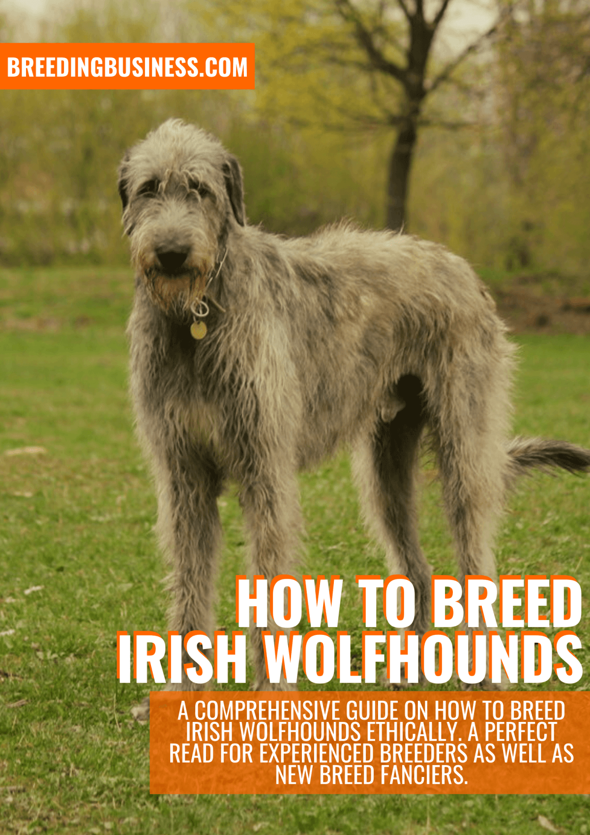 how to breed irish wolfhounds