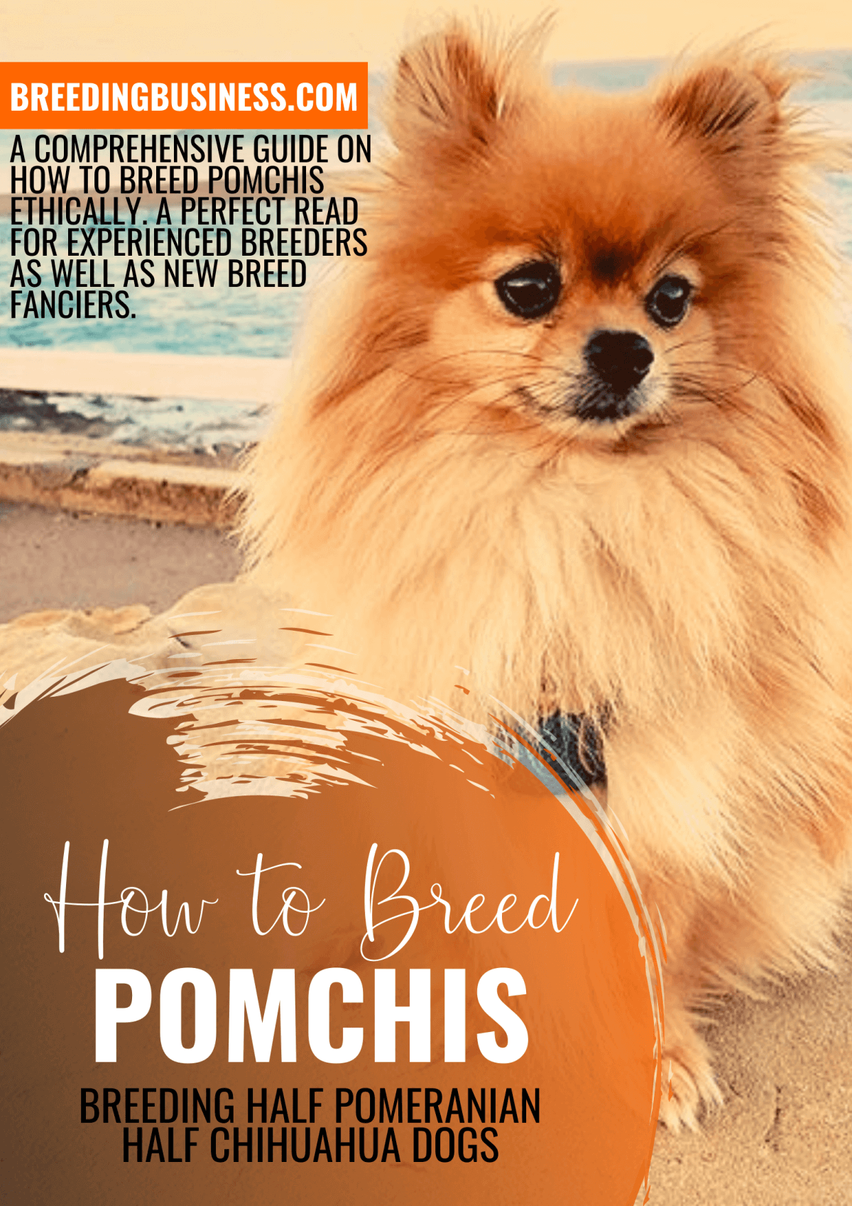 how to breed pomchis