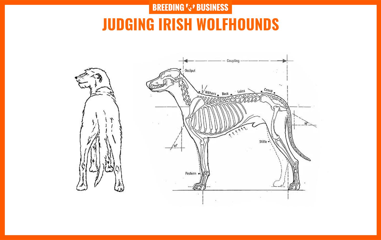irish wolfhounds breed standard