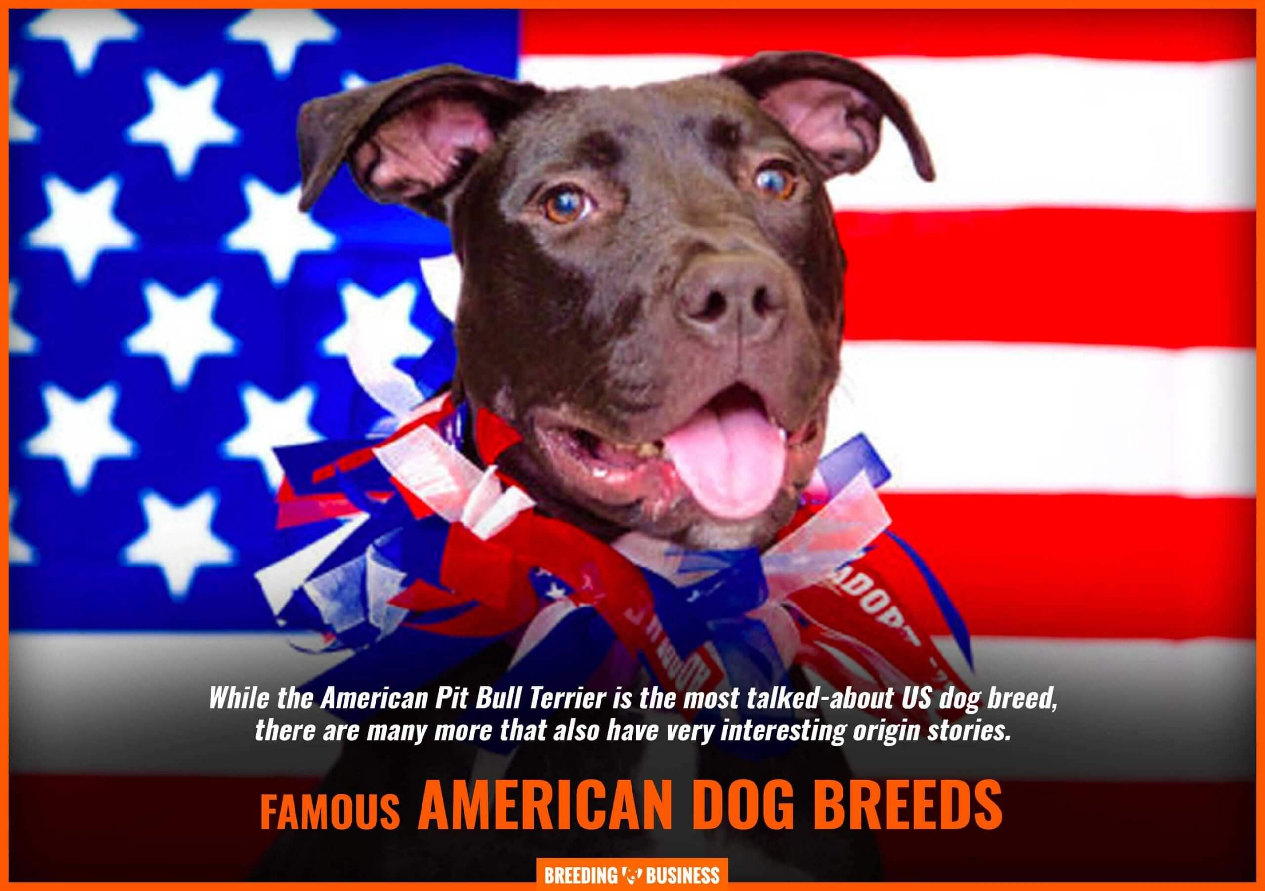 North American dog breeds