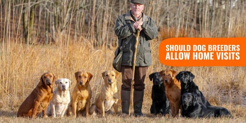 Should Dog Breeders Allow Home Visits