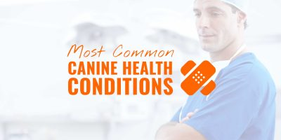 common canine health conditions