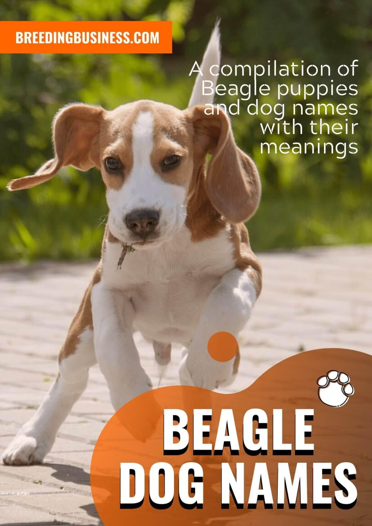 The best Beagle dog names!