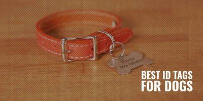10 Best Dog Name Tags & ID Tags for Dogs