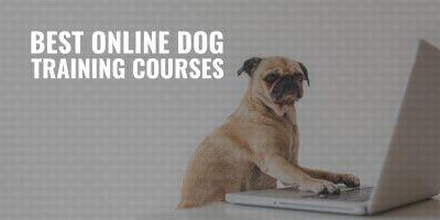 10 Best Online Dog Training Courses