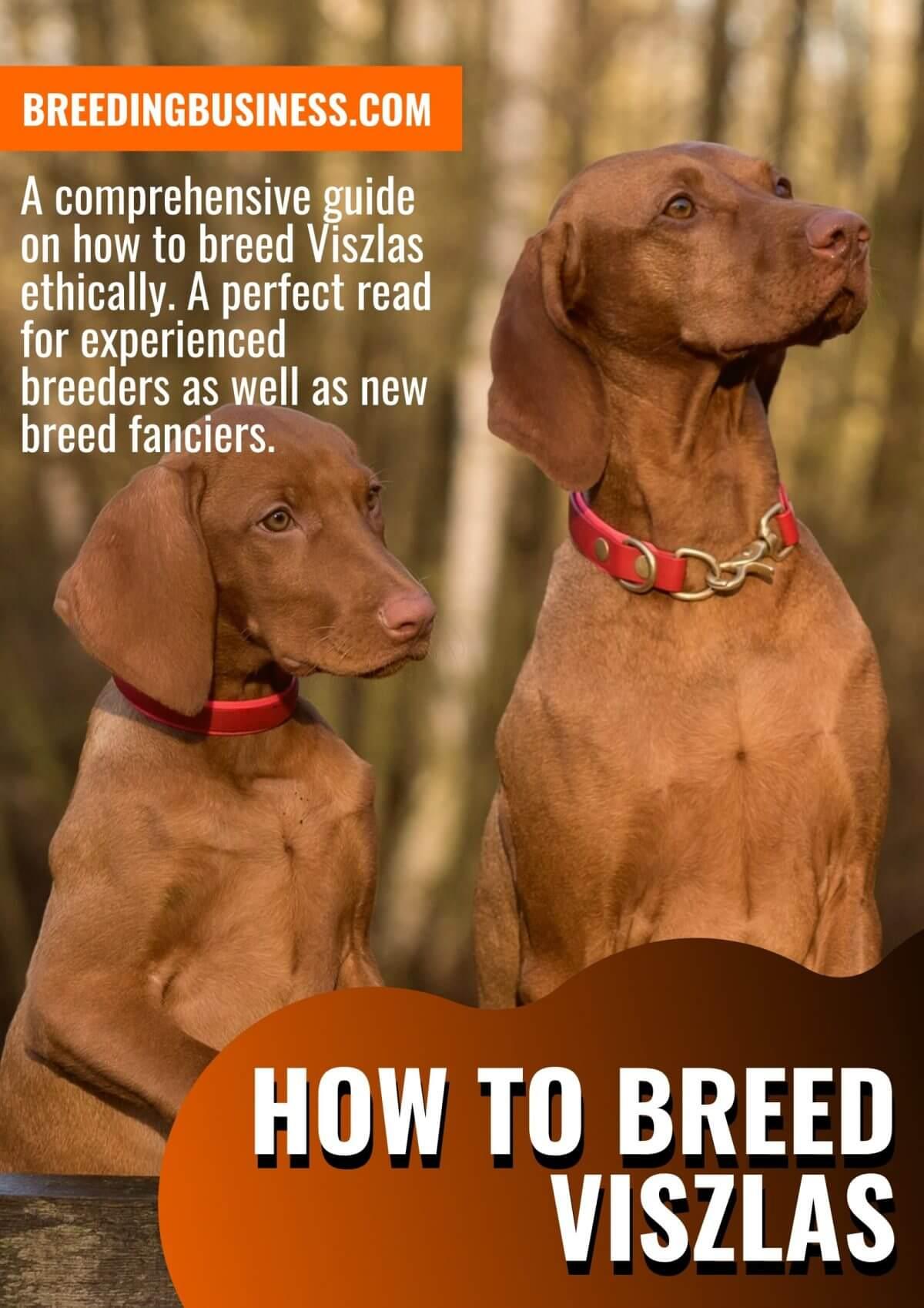 breeding vizslas (guide)
