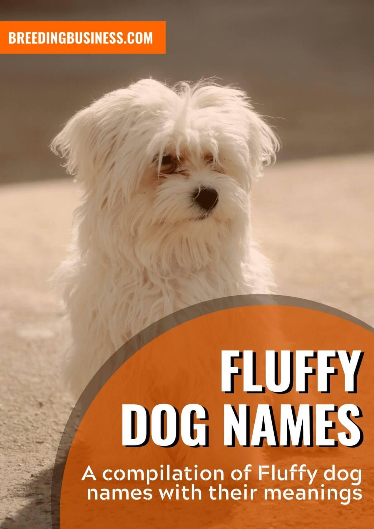 best fluffy dog names