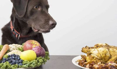 Food-Inspired Dog Names: 100+ Culinary & Cuisine Name Ideas for Puppies