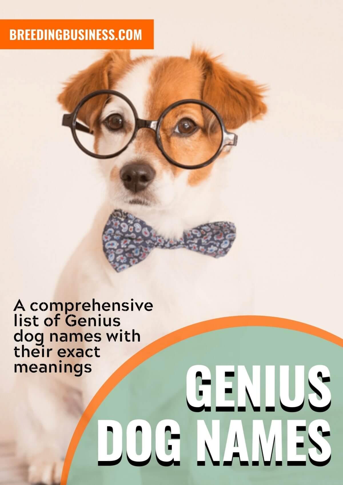 genius dog names