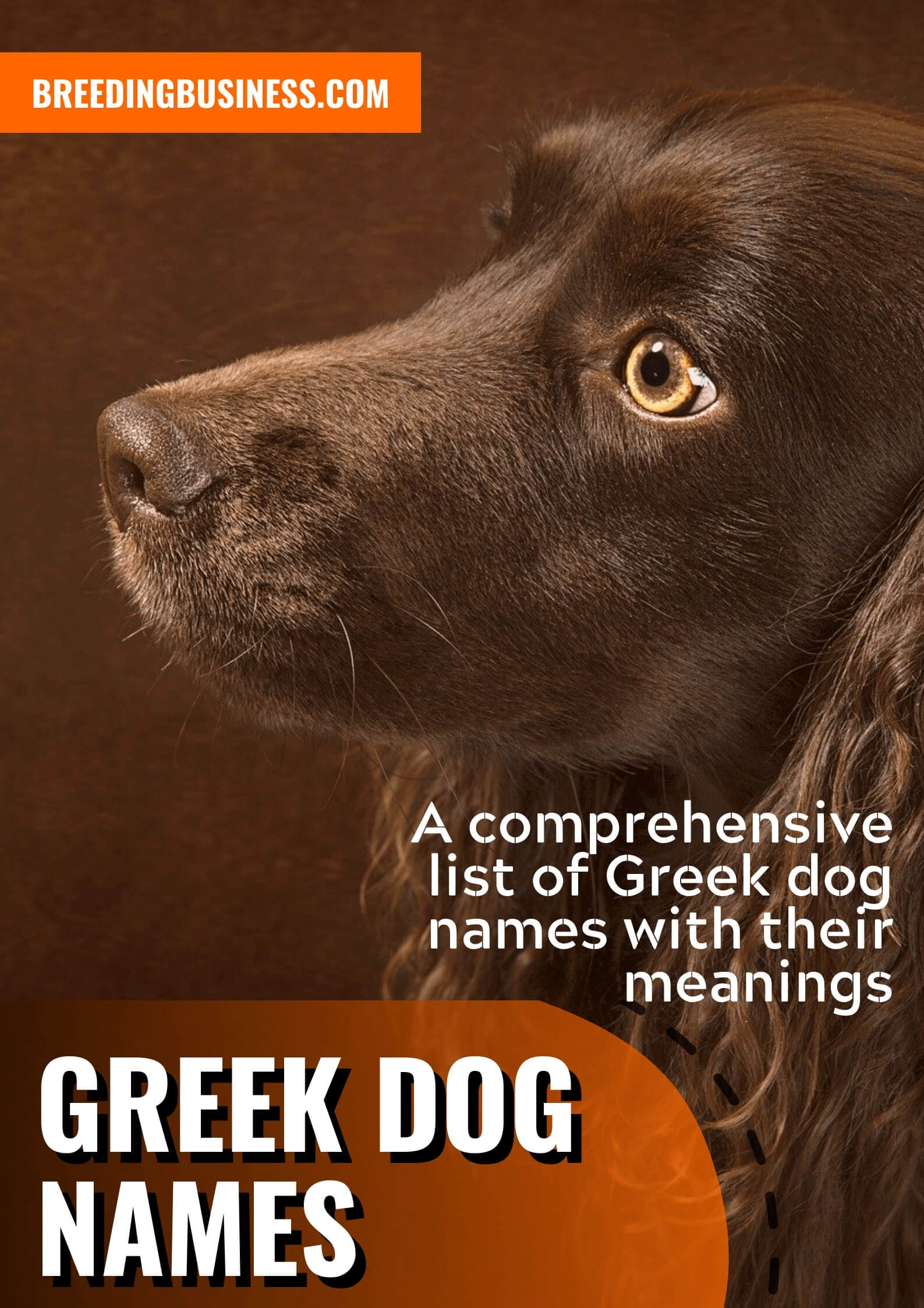 Greek Dog Names