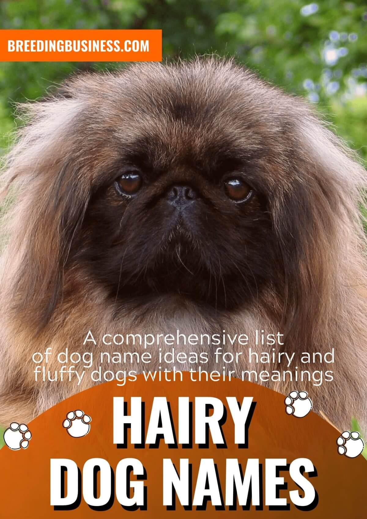 hairy dog names