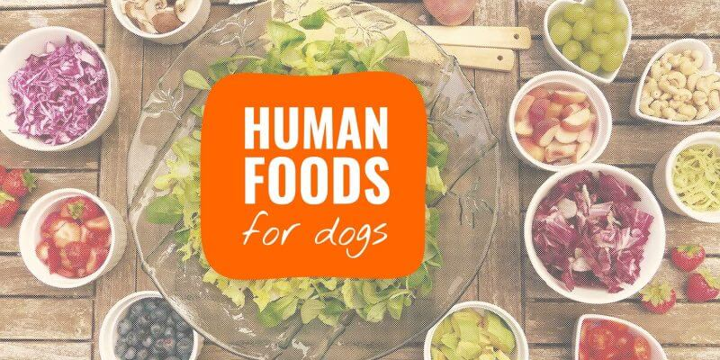 human foods for dogs
