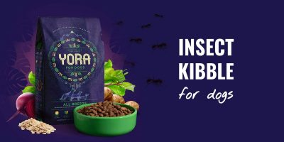insect kibble for dogs